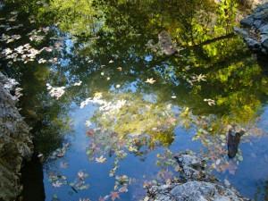 Dutch Bill Creek reflections