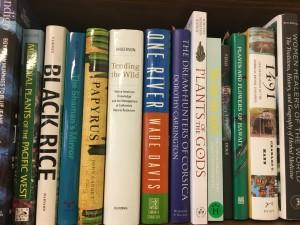 BD- blue toned book shelf