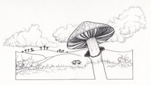 mushroom illustration- Kathleen harrison