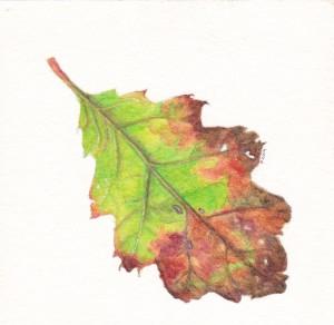 Botanical Illustration by Paetra Tauchert